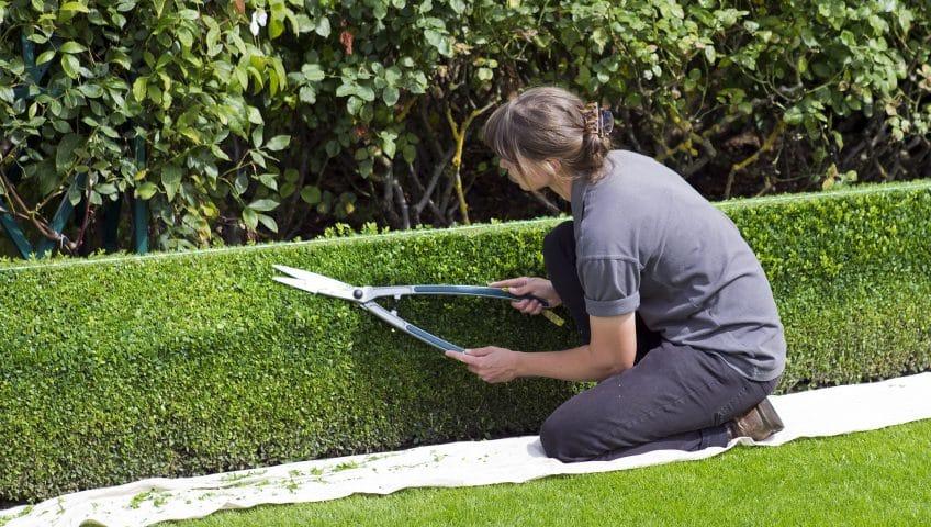 box-hedge-topiary-869073_1920